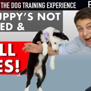 I've Had My Puppy 6 Days and She's NOT TRAINED! (NEW SERIES: The Dog Training Experience Episode 5)