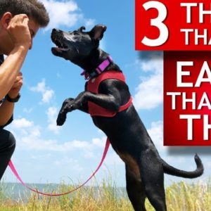 3 Easy Things to Teach Any Dog That Most People Think Are Hard (Teeth brushing, let go of toys...)