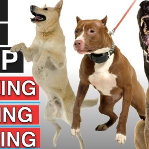How To Train Your Dog To Stop Leash Pulling, Stop Barking, and Stop Jumping!