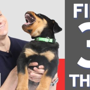 3 MORE Things To Teach Your New Puppy!