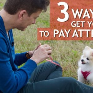 3 Ways to Get your Dog to Pay Attention!