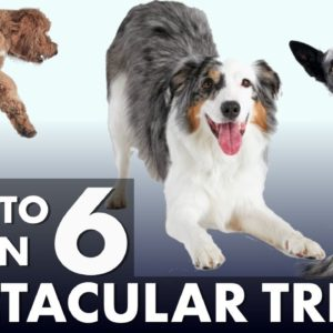 6 Impressive Dog Tricks That Are Easier Than You Think!