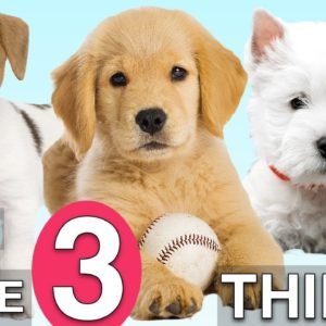 Do These 3 Things To Train Your NEW PUPPY Fast!