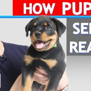 How Does a Puppy Experience the World?