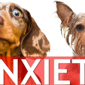 How To Stop Dog Anxiety (Separation Anxiety, Bath Anxiety...)