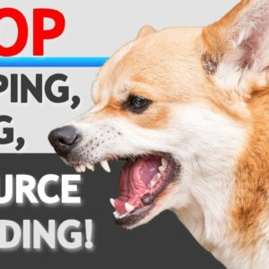 "How to STOP ""Food Aggression""/ Resource Guarding in Dogs- WITHOUT FORCE"