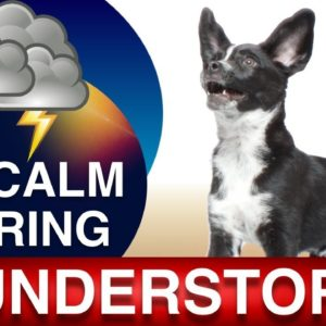 How to Teach Your Dog to Be Comfortable During Thunder Storms