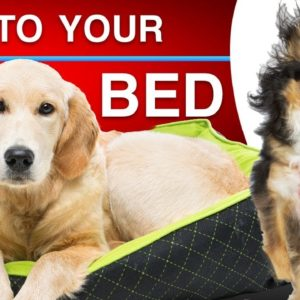 How To Teach Your Dog To Go To Their Bed When Asked