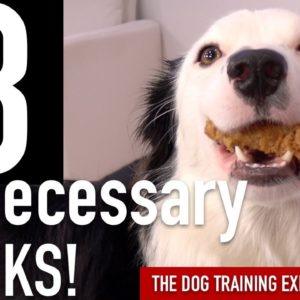 How to Train 3 Tricks I've NEVER Taught to a Dog Before!