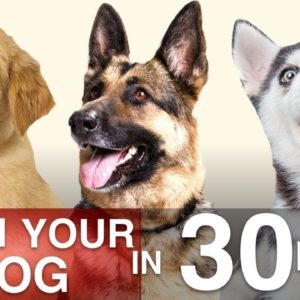 How To Train Your Dog in 30 Days!
