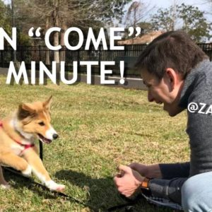 "How To Train Your Dog To ""Come When Called"" in 1 Minute!"