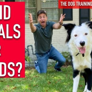 How to Train Your Dog to HAND SIGNALS and WORDS!