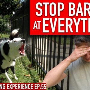 How to Train Your Dog to STOP BARKING at EVERYTHING That Moves!!