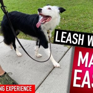 How To Train Your Dog to Walk Perfectly! This is all you have to do!