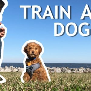 How To Train Your NEW DOG! (Stay, Clicker Training, Puppy Training)