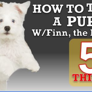 How To Train Your Puppy Leash Walking and 4 More Things!