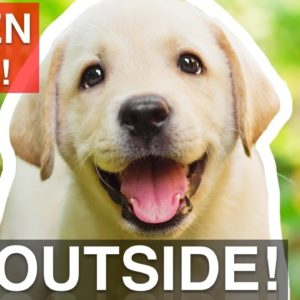How to Train Your Puppy To Listen OUTSIDE!