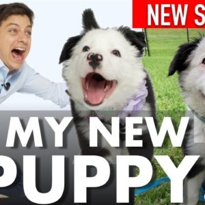 I Got A NEW PUPPY! Did I Do The Right Thing? New Series!