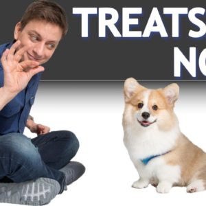 If, Why, and How You Should Use Treats When Training Your Dog