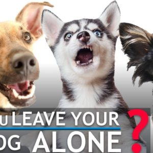 If You Ever Leave Your Dog Alone, Check This Out