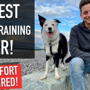 How to Walk a Dog: Even if Your Dog is TERRIBLE on LEASH, You Can Do This Training Walk!