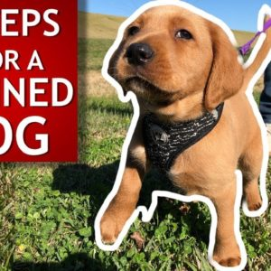 This Dog Wouldn't Listen Until We Tried This! Train Your Dog In Minutes, Easily!