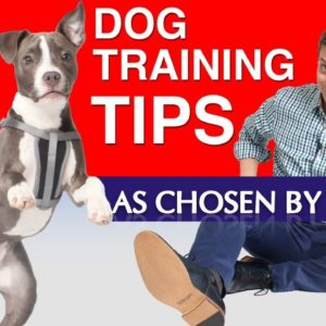 My Top 10 Most Helpful Dog Training Tips as Chosen By You! (Signed Books Giveaway and more)
