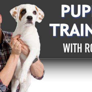 Puppy Training with Roux