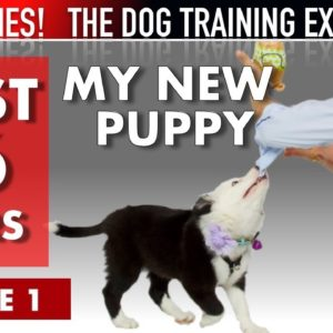 My New Puppy: The First 36 Hours (NEW SERIES: The Dog Training Experience Episode 1)