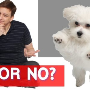 Should you Spay or Neuter Your Dog?