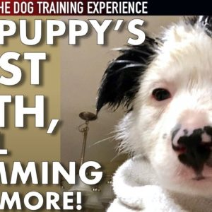 My Puppy's First Bath, Nail Trimming & More! (New Series: The Dog Training Experience Ep. 7)
