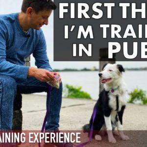 The First Things I'm Training My Puppy in Public!