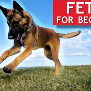 Train ANY Dog How To Play Fetch PERFECTLY