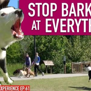 How To Train Your Dog To STOP BARKING at EVERYTHING That MOVES! Continued...