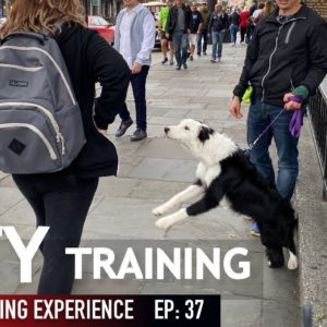 WILD! Training My Puppy in the City WAS Crazy!