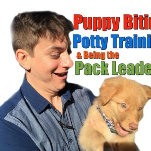 Advice that Anyone with a Dog Needs to Know: Puppy Biting, Potty Training & Being the Pack Leader