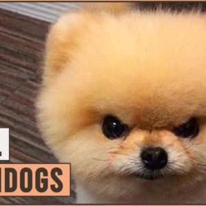 10 Best Small Watchdogs - Will Protect You