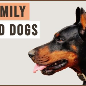 10 Family Dogs That Protect You With Their Life