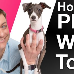 3 Ways to Get your Dog Playing!