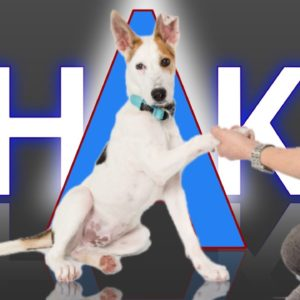 How To Teach Your Dog To Shake Hands