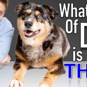 All Dog DNA Tests are not Created Equal