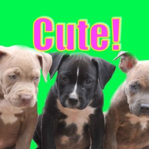 "Cutest Puppies EVER! Playing ""Ruff""!"