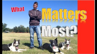 Dog Training 101: What matters most in dog training?