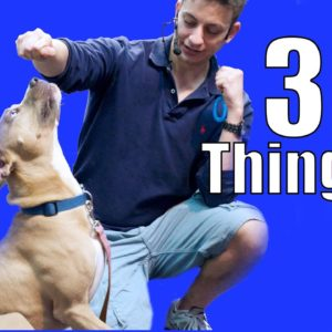 Dog Training: Are You Doing These 3 Things?