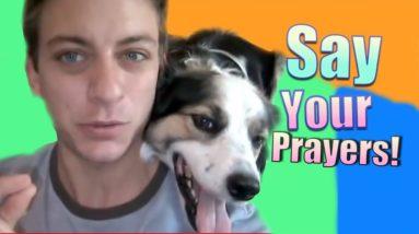 "Dog Training: How To Teach Your Dog ""Say Your Prayers"""