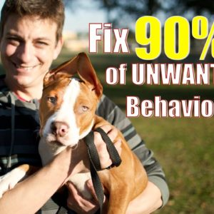 Doing THIS will eliminate over 90% of behavior problems in your dog.