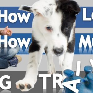 How Often and How Long Should you Train Your Dog?