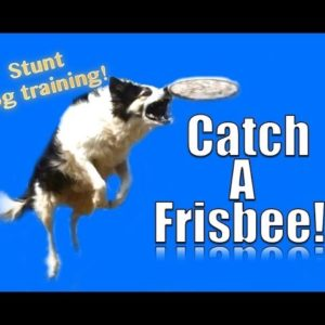How to Teach your Dog to Catch a Frisbee in the Air
