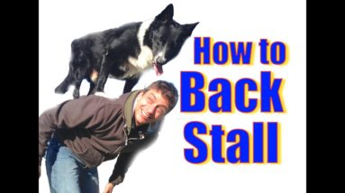 How to teach Your Dog To Stand on Your Back! (the back stall)