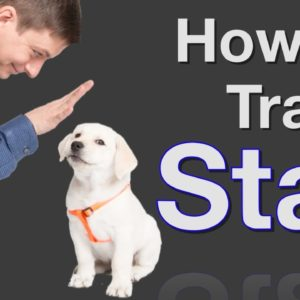 How to Teach your Dog to Stay in 3 Steps Force Free!